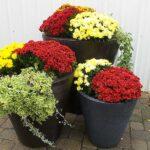 Fall Seasonal Pot Display
