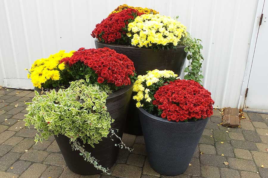 Fall Seasonal Pot Display