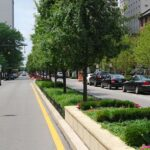 commercial landscaping services best trees for City Street plantings