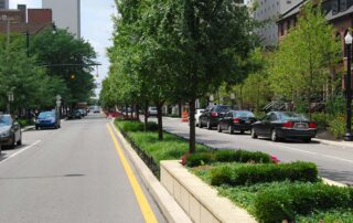 How to select the best trees for City Street plantings?