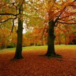 disease is killing beech trees