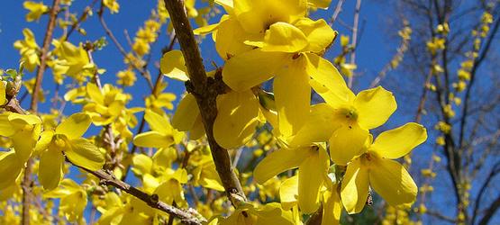 Calendar - February - Spring Color