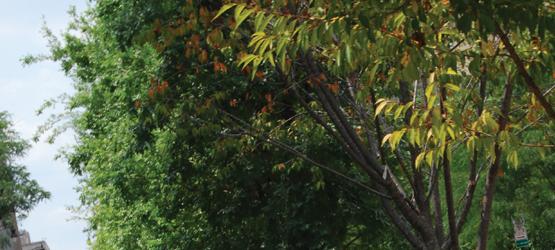 Calendar - September - Fall