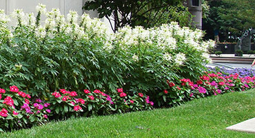 Sustainable Landscaping Design Approaches