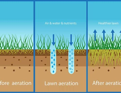 Lawn Aeration and Overseeding – why and when